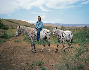 Appaloosa-Akhal-Teke horse, product of the Lapwai Breeding Program [Credit: Erika Larson]