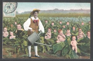 A 1905 postcard depicting a  baby farmer in a cabbage patch.