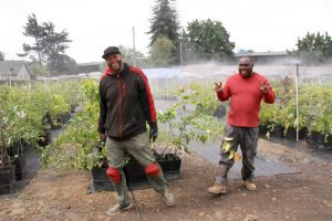 Employees water the nursery in Sobrante Park. (Credit: Planting Justice)