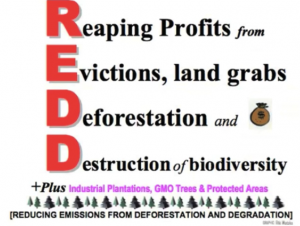"Tom Goldtooth of the Indigenous Environmental Network explains REDD/REDD+ projects as, ""pushing forward to a next level economic globalization that is nothing but privatization of nature"" (from the Mending News, 2012)."