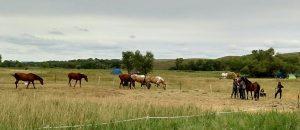 horses at SR