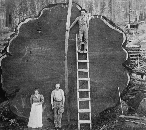 Old Growth Log. Credit: https://tinyurl.com/h53oxzk
