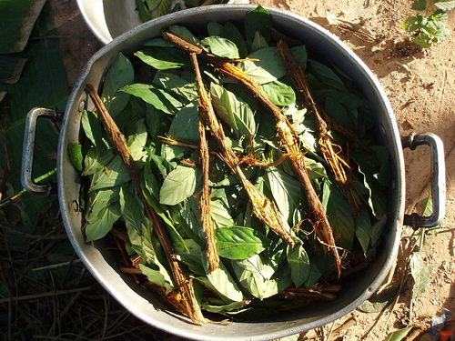 https://tl.wikipedia.org/wiki/Ayahuasca#/media/File:Ayahuasca_and_chacruna_cocinando.jpg